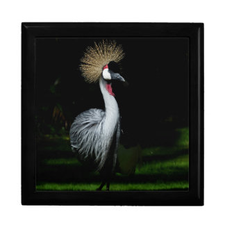 South africa grey crowned crane gift box
