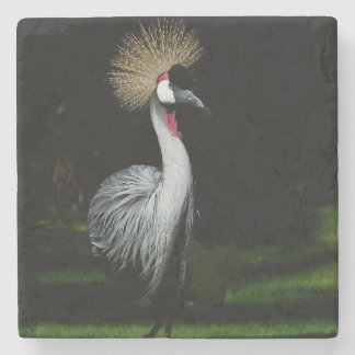 South africa grey crowned crane stone coaster