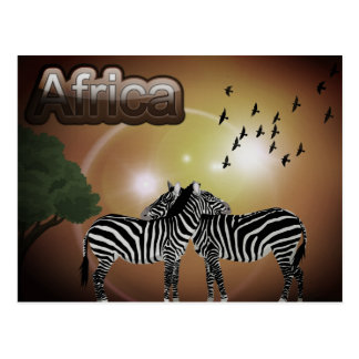 South Africa Vintage Zebra Travel Postcard