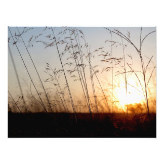 South-African savanna grass Photographic Print