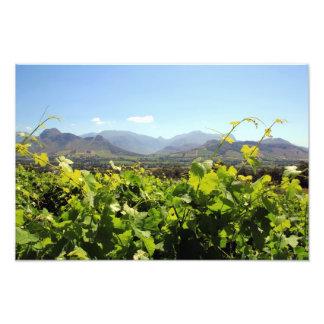 South Africa's beautiful vineyards Photograph