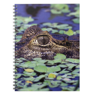 South America, Brazil, Amazon Rainforest, 4 Notebook