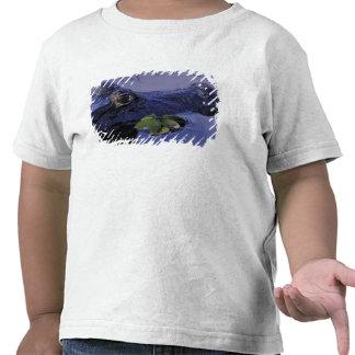 South America, Brazil, Amazon Rainforest, Shirts