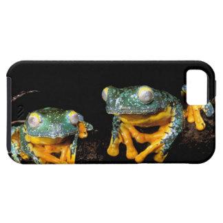 South America, Ecuador, Amazon. Leaf frogs Tough iPhone 5 Case