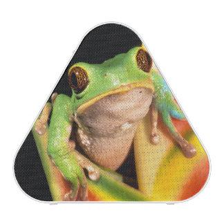South America, Ecuador, Amazon. Tree frog