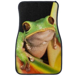 South America, Ecuador, Amazon. Tree frog Car Mat