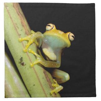 South America, Ecuador, Amazon. Tree frog (Hyla Printed Napkins