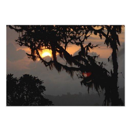 South America, Ecuador, cloud forest scene in Photo Print