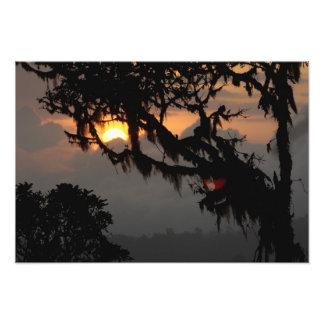South America, Ecuador, cloud forest scene in Photographic Print