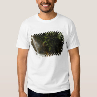 South America, Ecuador, eastern slope of the Tshirts