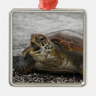 South America, Ecuador, Galapagos Islands, 2 Metal Ornament