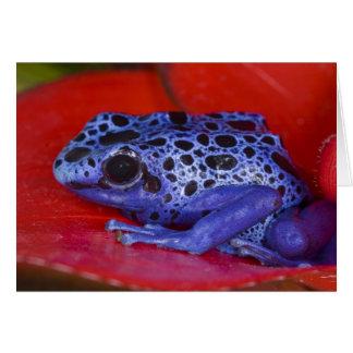 South America, Republic of Surinam. Close-up 2 Card
