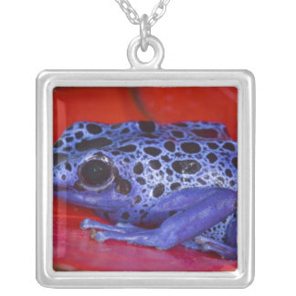 South America, Republic of Surinam. Close-up 2 Square Pendant Necklace