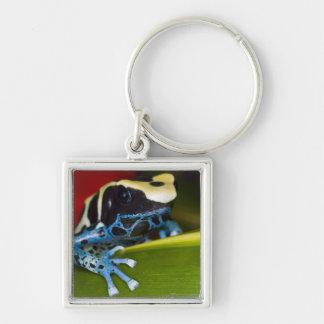 South America, Republic of Surinam. Close-up Key Ring