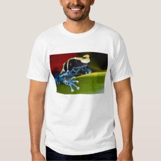 South America, Republic of Surinam. Close-up Tee Shirts