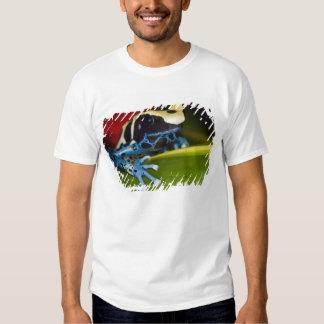 South America, Republic of Surinam. Close-up Tshirts