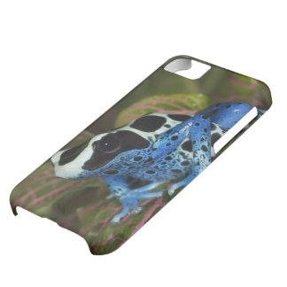 South America, Surinam. Close-up of Patricia iPhone 5C Case