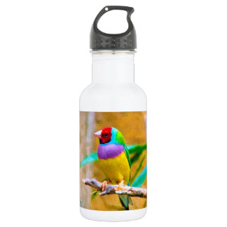 South American Finch 532 Ml Water Bottle