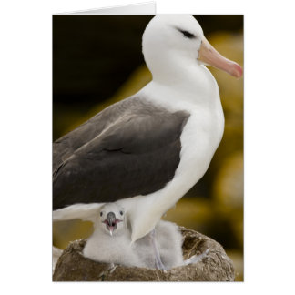 South Atlantic, Falkland Islands, New Island. 2 Card