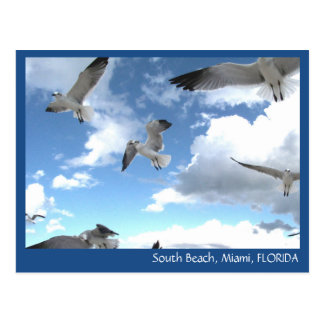 South Beach Miami Florida Seagulls Postcard
