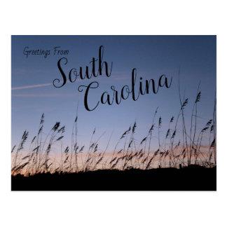 South Carolina Sand Dunes Postcard