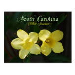 South Carolina State Flower: Yellow Jessamine Post Cards
