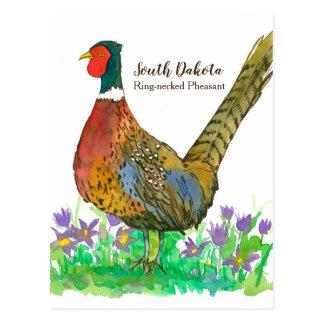 South Dakota Ring Necked Pheasant Pasque Flower Postcard