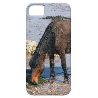South Devon Beach Wet Dartmoor Pony Eating Seaweed iPhone 5 Case