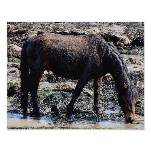 South Devon Beach Wet Looking Dartmoor Pony Photo Print