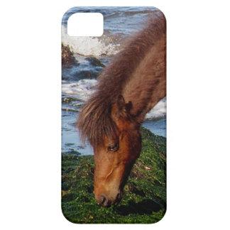 South Devon Coast Dartmoor Pony Eating Seaweed iPhone 5 Case