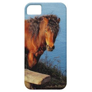 South Devon Coast Dartmoor Pony Near Bench .2. iPhone 5 Covers