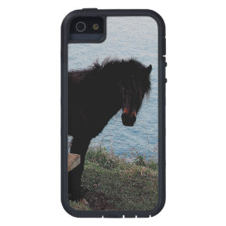 South Devon Coast Dartmoor Pony Near Bench . 3 . Case For The iPhone 5