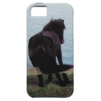 South Devon Coast Dartmor Pony Itching On Bench iPhone 5 Case
