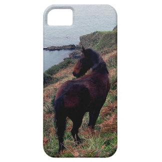South Devon Coastline Dartmoor Pony Looking Case For The iPhone 5