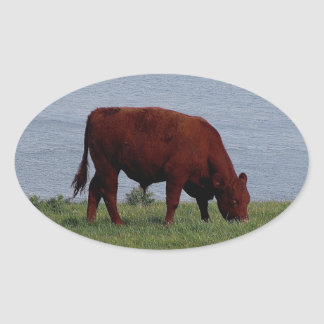 South Devon cow on remote coastline Oval Sticker