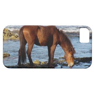 South Devon Dartmoor Pony On Beach Licking Sea iPhone 5 Covers