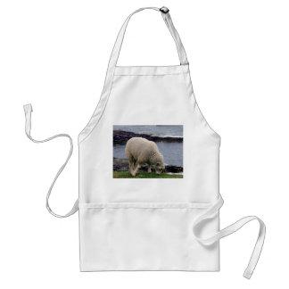South Devon Lamb On Remote Wild Coastline Standard Apron