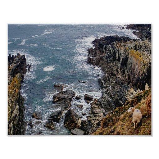 South Devon Sheep On Remote Coast Cliff Path Photo