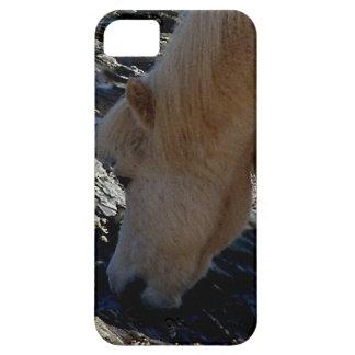 South Devon Shetland Pony Eating Seaweed On Beach iPhone 5 Covers