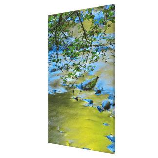 South Fork Wilson River, Oregon Canvas Print