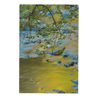 South Fork Wilson River, Oregon Wood Print