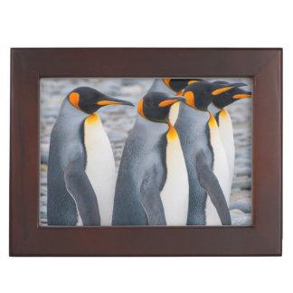 South Georgia. King penguins Keepsake Box