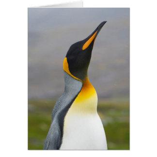 South Georgia. Saint Andrews. King penguin 2 Card