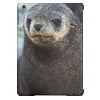 South Georgia. Stromness. Antarctic fur seal 3 iPad Air Case