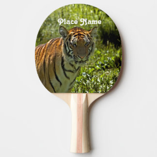 South Korean Tiger Ping Pong Paddle