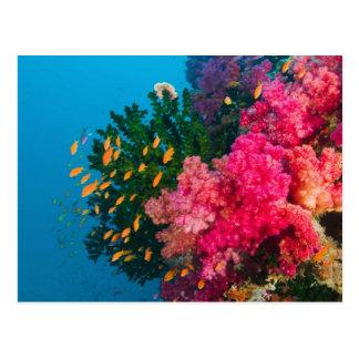 South Pacific, Fiji, Viti Levu, Bligh Water, Postcard