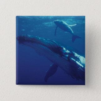 South Pacific, Tonga. humpback whale and calf 15 Cm Square Badge