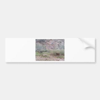 South Rim Grand Canyon National Park Phantom Ranch Bumper Sticker