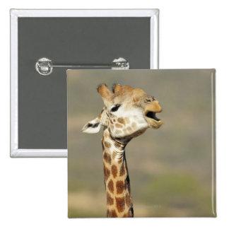 Southern African giraffe (Giraffa camelopardalis 15 Cm Square Badge