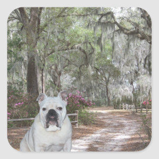 Southern Belle Square Sticker